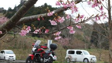 バーチーは鋸南町の頼朝桜を訪ねます♪ | Webikeツーリング