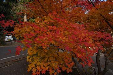 栃木市、足利市、紅葉を見る、感じる 11月16日準備 | Webikeツーリング