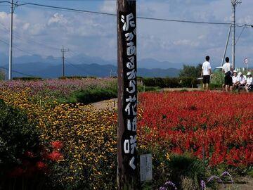 泥があるから花は咲く 群馬県/高崎市/鼻高展望花の丘   Webikeツーリング