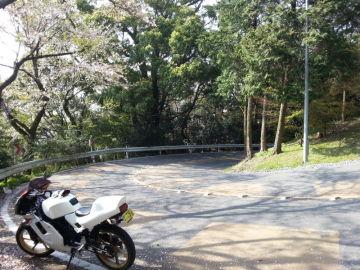桜ヘアピン | Webikeツーリング