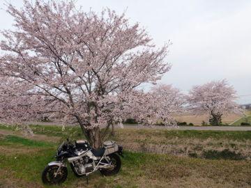 竜王の桜 | Webikeツーリング