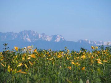 ビーナスラインに夏が来た! ニッコウキスゲが咲く場所へ | Webikeツーリング