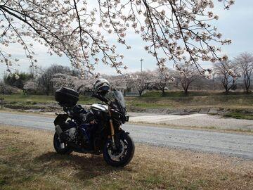 桜見物 | Webikeツーリング