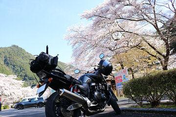 桜を見に行ってきました!!   Webikeツーリング