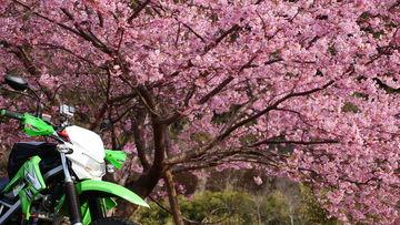 二日連続で梅花見!?古座川・串本ツーリング♪ | Webikeツーリング