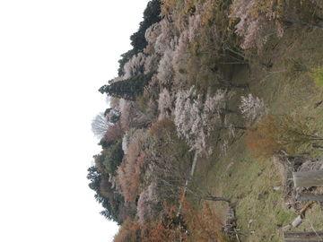 千本桜~♪   Webikeツーリング