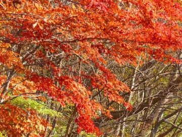 紅葉の季節ですよ今は。 | Webikeツーリング