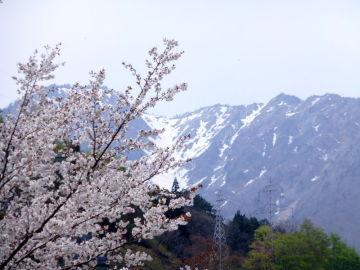 ひさかたの 光のどけき 春の日に ・・・   Webikeツーリング