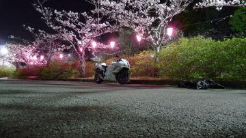 2014年夜桜 | Webikeツーリング