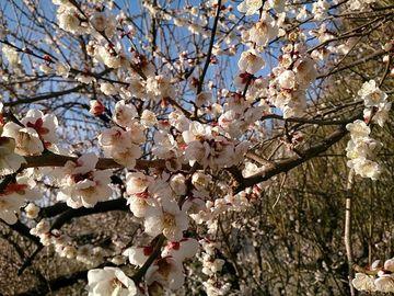 初、ラーメンの旅、1都2県物語、小田原周遊の旅 (1月30日水曜日準備) | Webikeツーリング