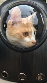 猫とドライブ   Webikeツーリング