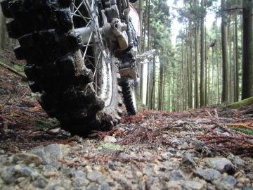 針葉樹の枯葉の道を行く | Webikeツーリング