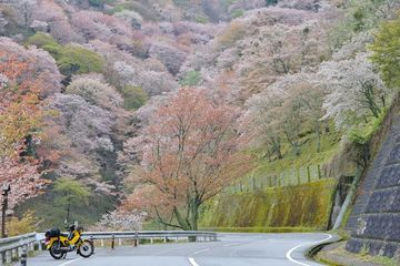 2019.04.15 桜ツーリング(3) | Webikeツーリング