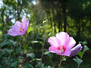 ムクゲ自然公園&深谷グリーンパーク・パティオ | Webikeツーリング
