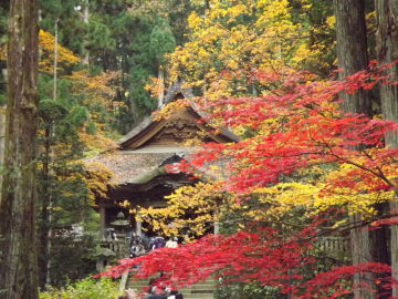 紅葉を求めて 駒ヶ根高原 | Webikeツーリング