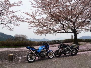 蒜山の桜(^^♪ | Webikeツーリング