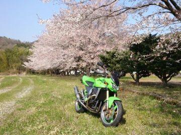 桜に誘われて | Webikeツーリング