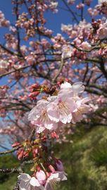 お花見へ | Webikeツーリング