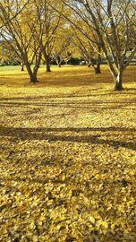 紅葉を観にいく Part3 | Webikeツーリング