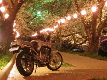散りゆく桜に感謝! | Webikeツーリング