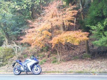 紅葉を見に英彦山へ | Webikeツーリング