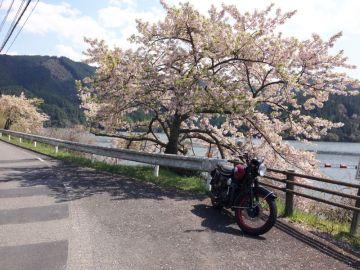 もう葉桜に | Webikeツーリング