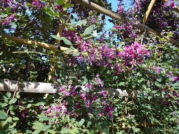 萩市 陶芸の村公園 萩の花 | Webikeツーリング