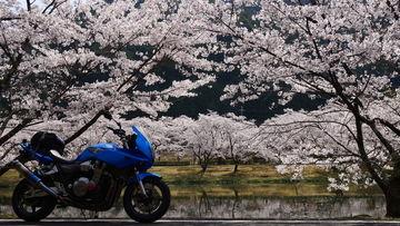 平成最後のお花見ツーへ♪熊野桜花見ツーリング | Webikeツーリング