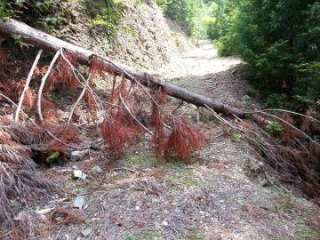 近所の林道行ってきました。 | Webikeツーリング