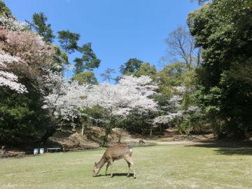 宮島へ行ってきました。【後編】 | Webikeツーリング