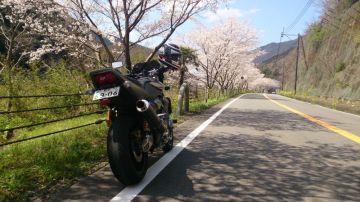 桜を求めてプチツー | Webikeツーリング