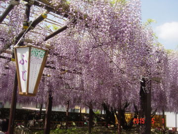 季節の花見 | Webikeツーリング