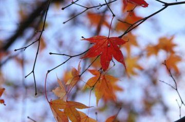 ウエット上等!落葉してても紅葉ツー!! | Webikeツーリング