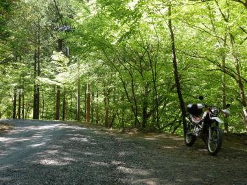 新緑の中津川林道へ | Webikeツーリング