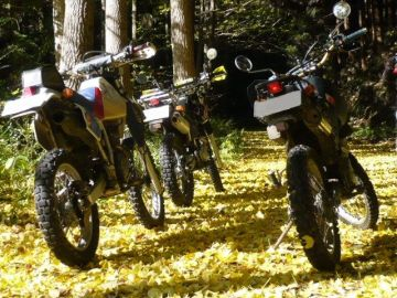 Autumn carpet | Webikeツーリング