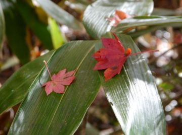 秋色三昧・・・紅葉とBグルメ | Webikeツーリング
