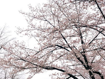 お花見からのラーツー   Webikeツーリング