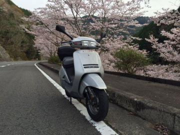 桜満開 | Webikeツーリング
