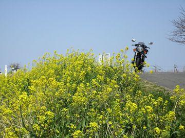 春爛漫♪花の名所めぐり/南関東ツーリング日記 | Webikeツーリング
