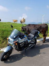 四国カルストで戯れる。牛さんと!!。 | Webikeツーリング