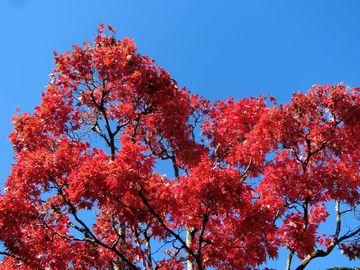 温泉と紅葉狩り・・・東北へ | Webikeツーリング