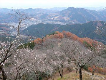 やはり名所の寒桜は良かった(桜山公園 寒桜) | Webikeツーリング
