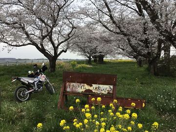 桜三昧、そして99999キロ、祝 | Webikeツーリング