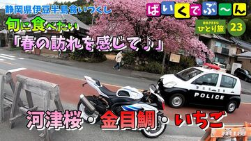 今年 初乗り 河津桜 ツーリング   Webikeツーリング