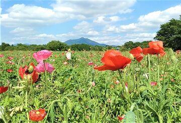 温泉と餃子・ラーメンと花畑と...(●o'∪`o)ノ?♪`*.+   Webikeツーリング