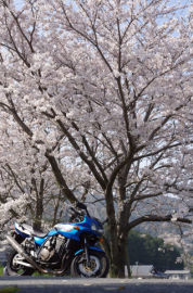 交換レンズを買ったので桜を撮ってきました | Webikeツーリング