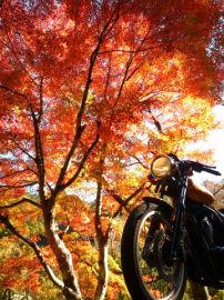 紅葉を見上げて | Webikeツーリング