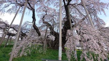 三春の滝桜ツーリング   Webikeツーリング