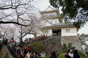 桜満開 小田原から伊豆へお泊りバイク旅 | Webikeツーリング