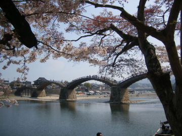 絶景!岩国錦帯橋の桜   Webikeツーリング